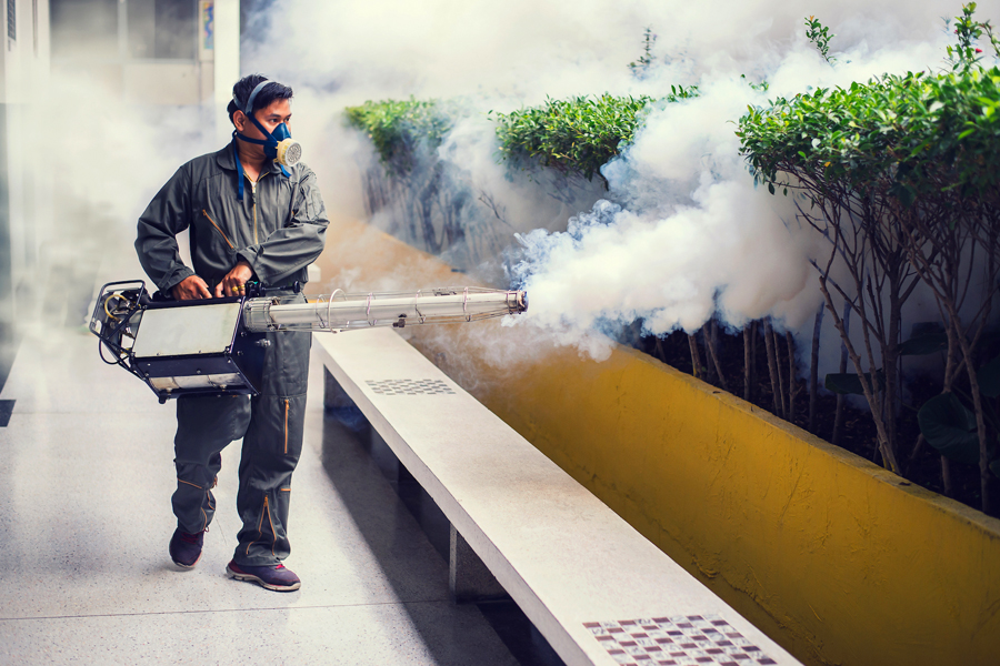 Pest Control Services Abu Dhabi